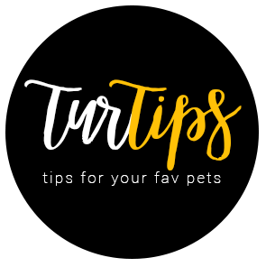 Tur Tips : Blog offering Top pet related information, Tricks & Tips