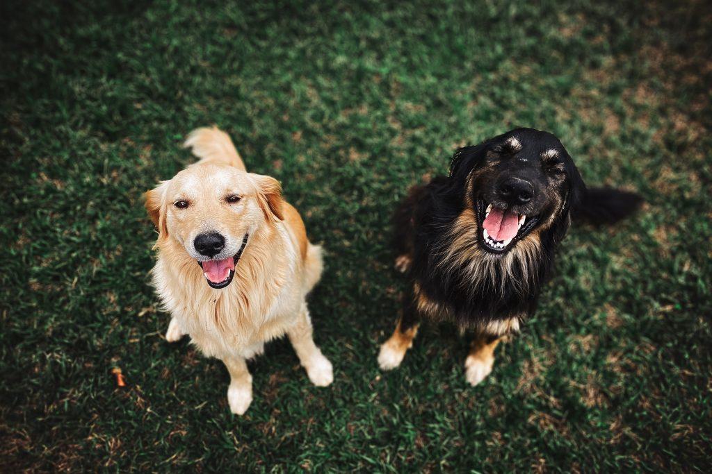 Periodontal disease in dogs: what is it?