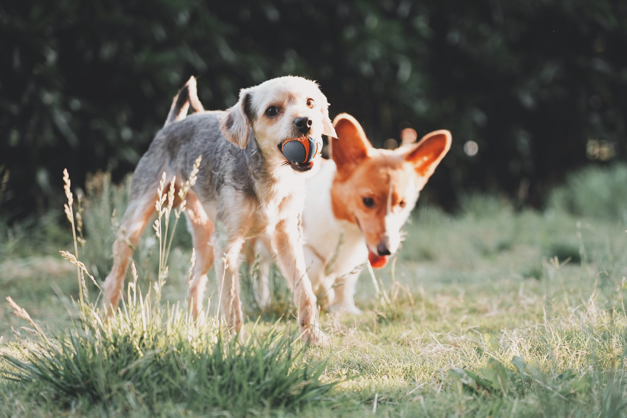 The best canine parks in Lisbon and Porto
