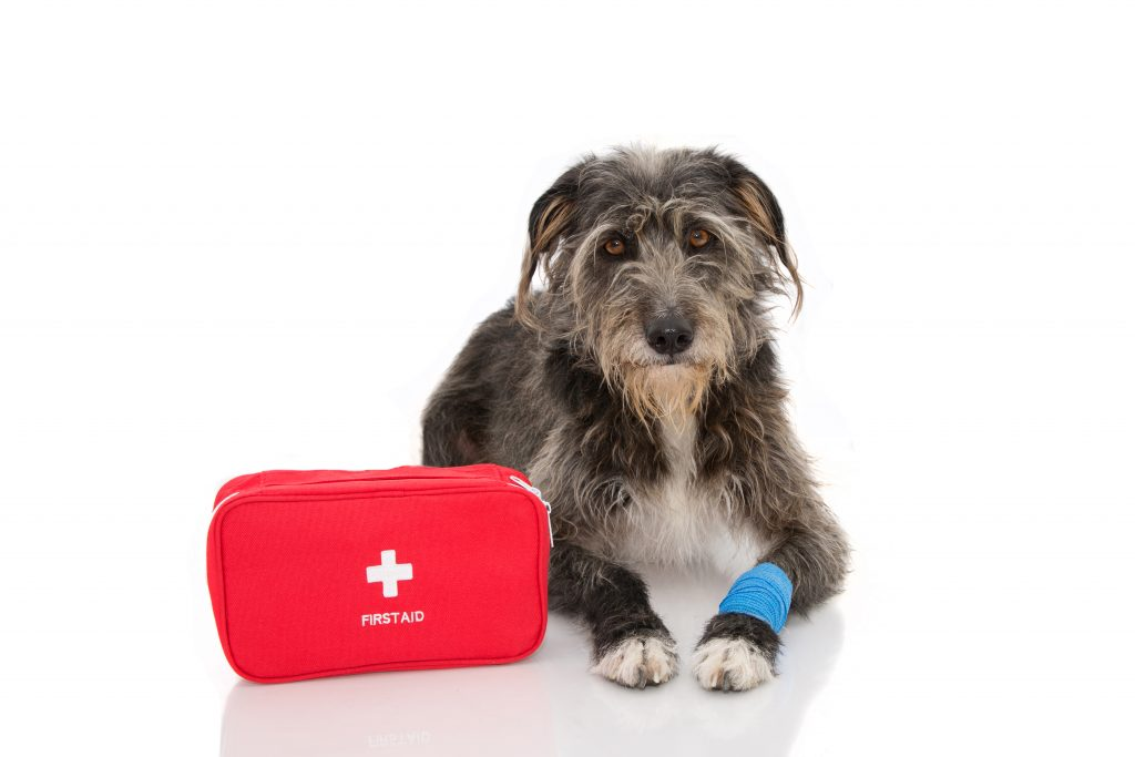 first aid in pets