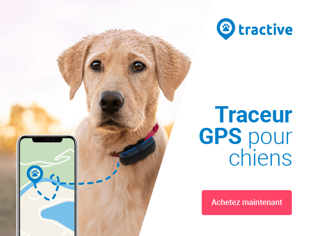Find your pets, dog and cat, thanks to the Tractive GPS tracker
