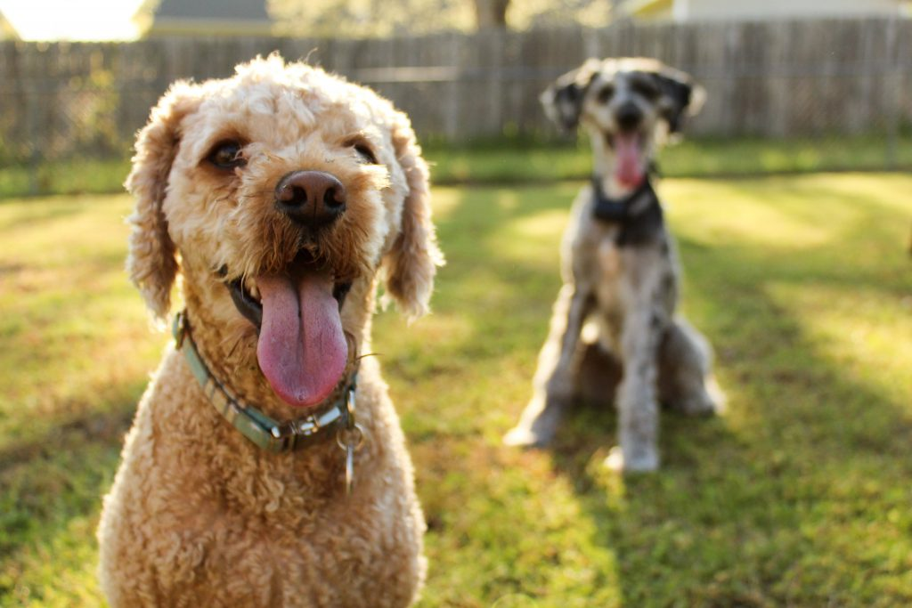 Which dog is the smartest?  Find out here.