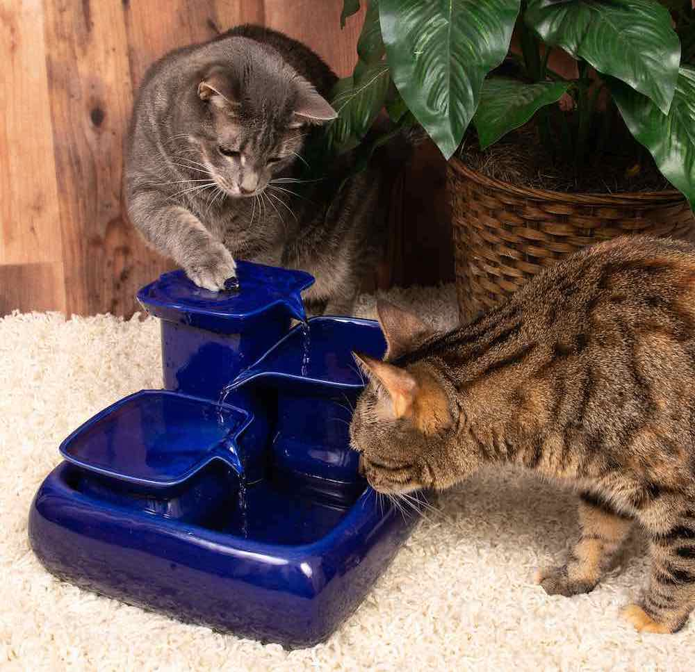 Miaustore Cat Water Fountain - Blue