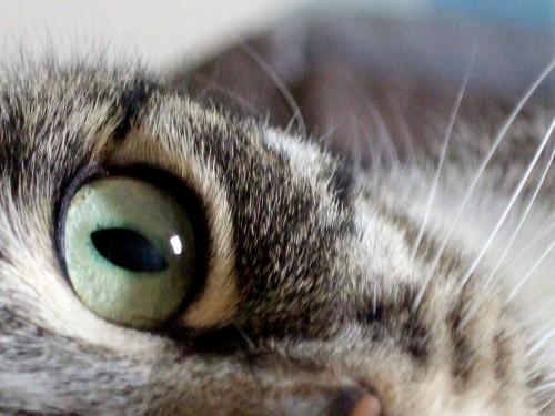 zoomalia cat behavior
