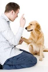 choose dog trainer
