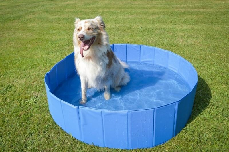 Large dog pool Zolia Oceadog - 120 cm